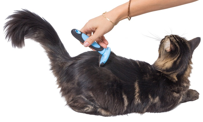hand brushing cat with shed brush