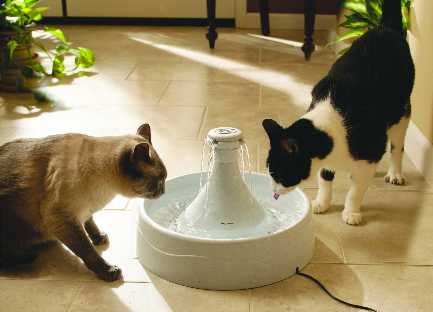 cats drinking from fountain