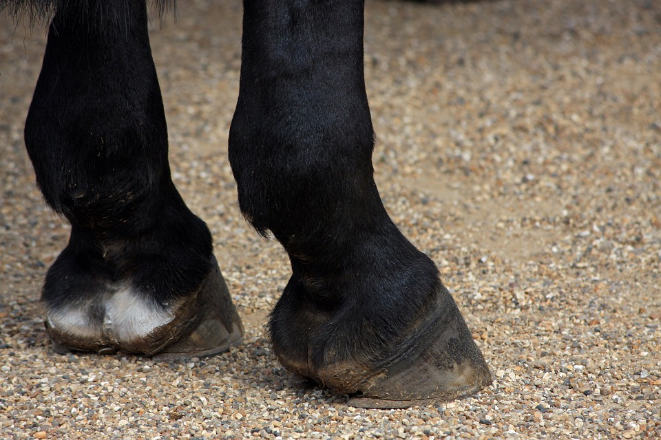 close-up of horse hooves on ground