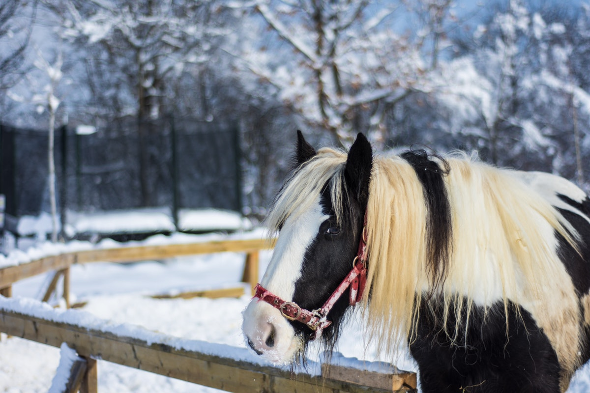 horse outside in snowy winter