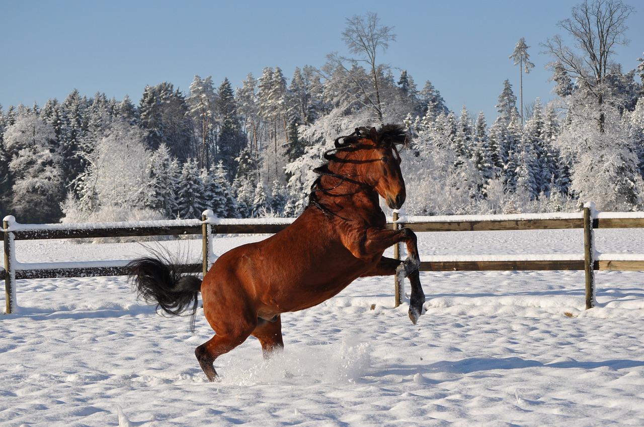 happy horse galloping high through snow