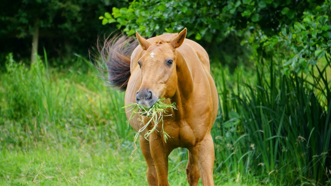 horse eating grass & plants