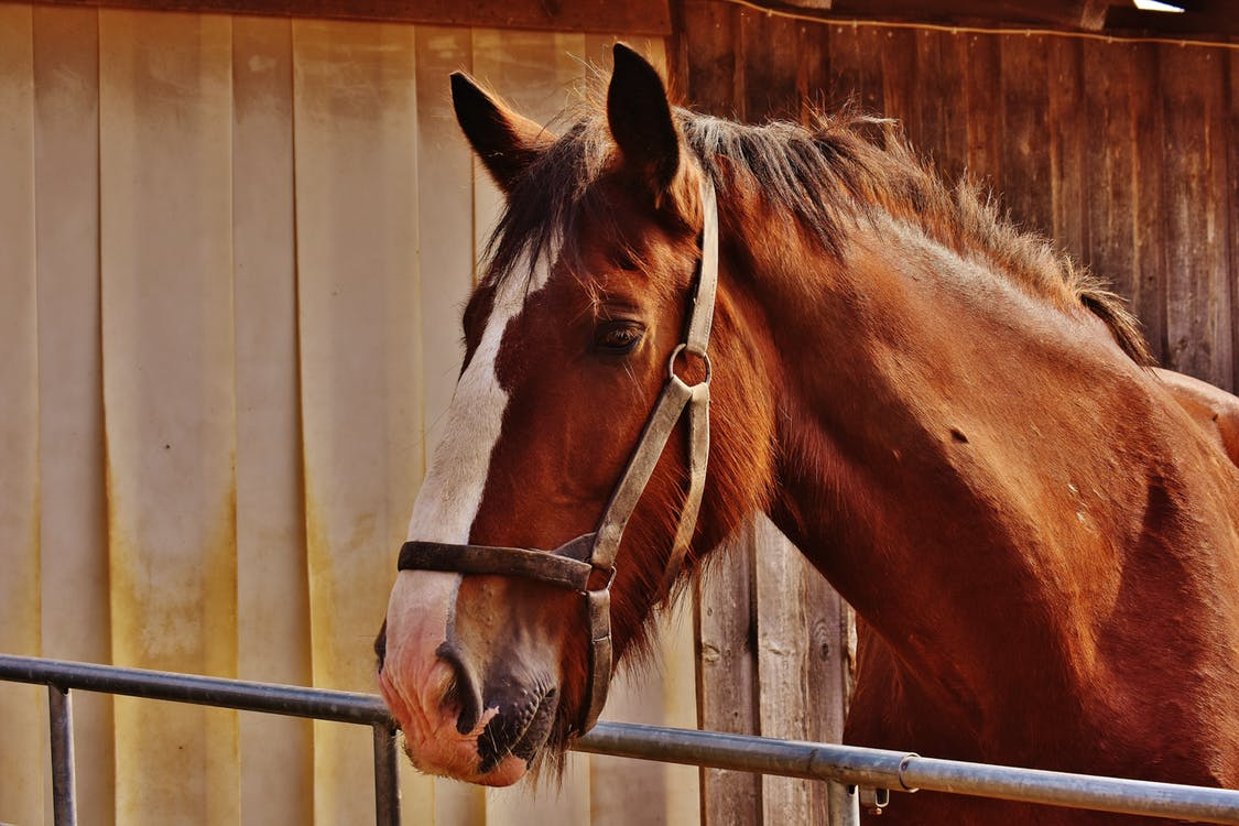 horse in clean & dry stable stall