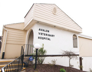 entrance of Avalon veterinary hospital