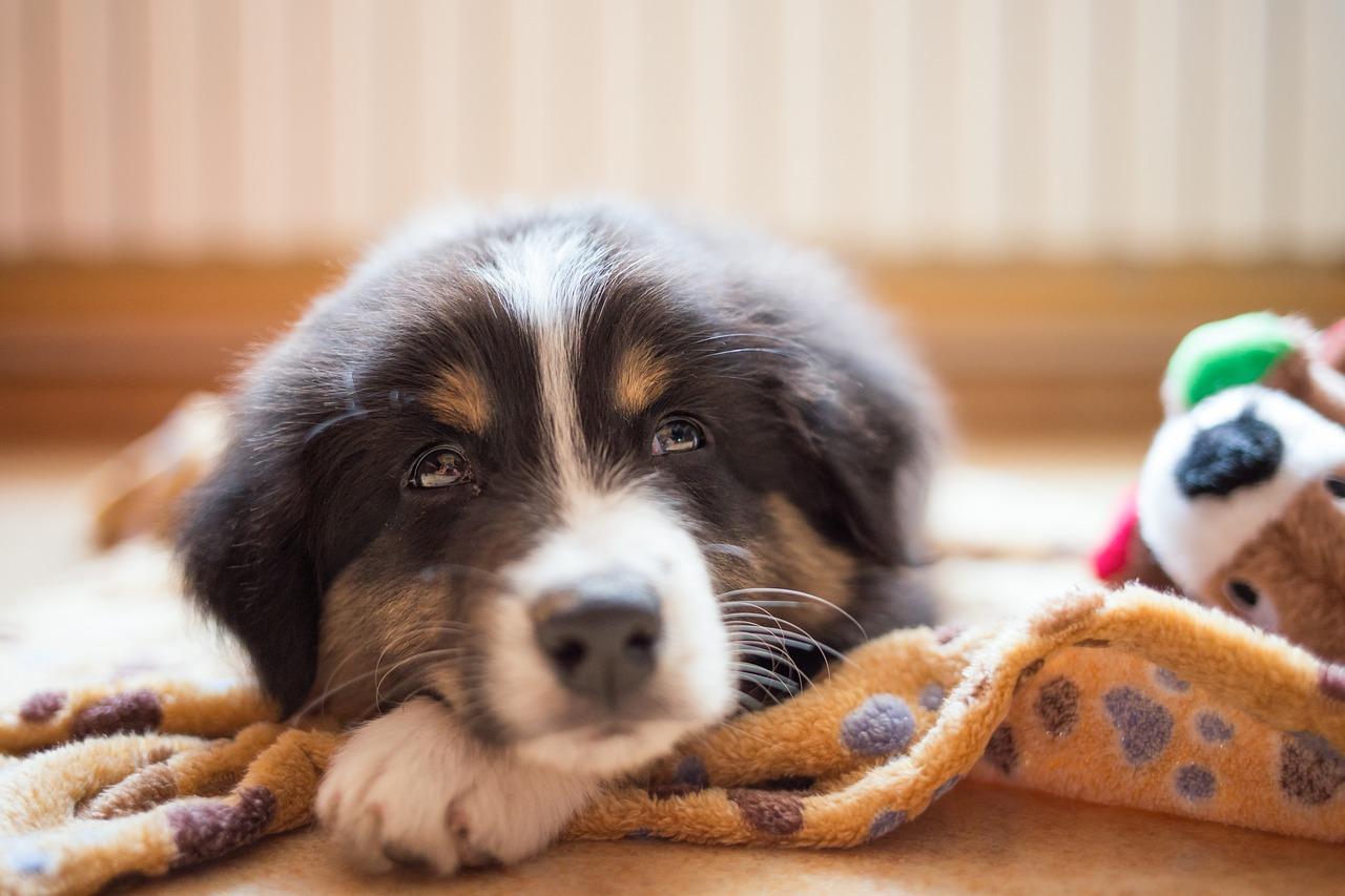 calm dreamy puppy