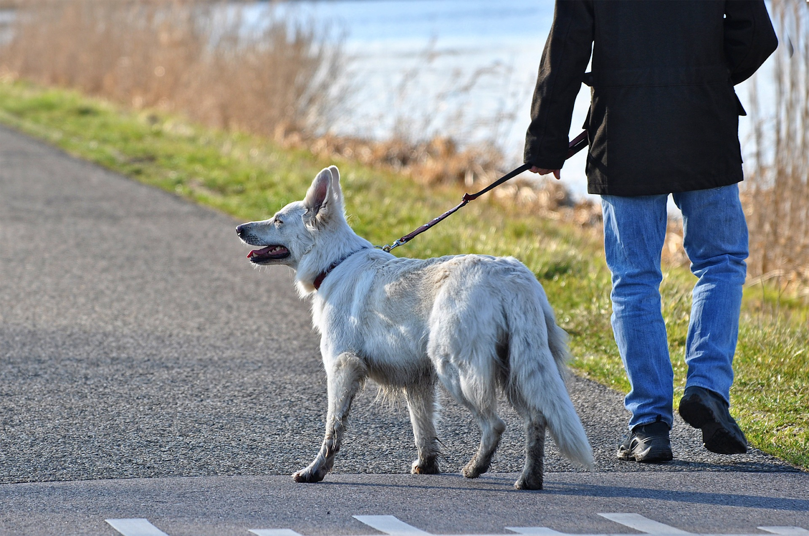 person walking and exercising their dog