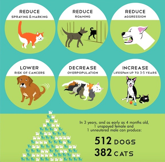 reasons to spay & neuter chart