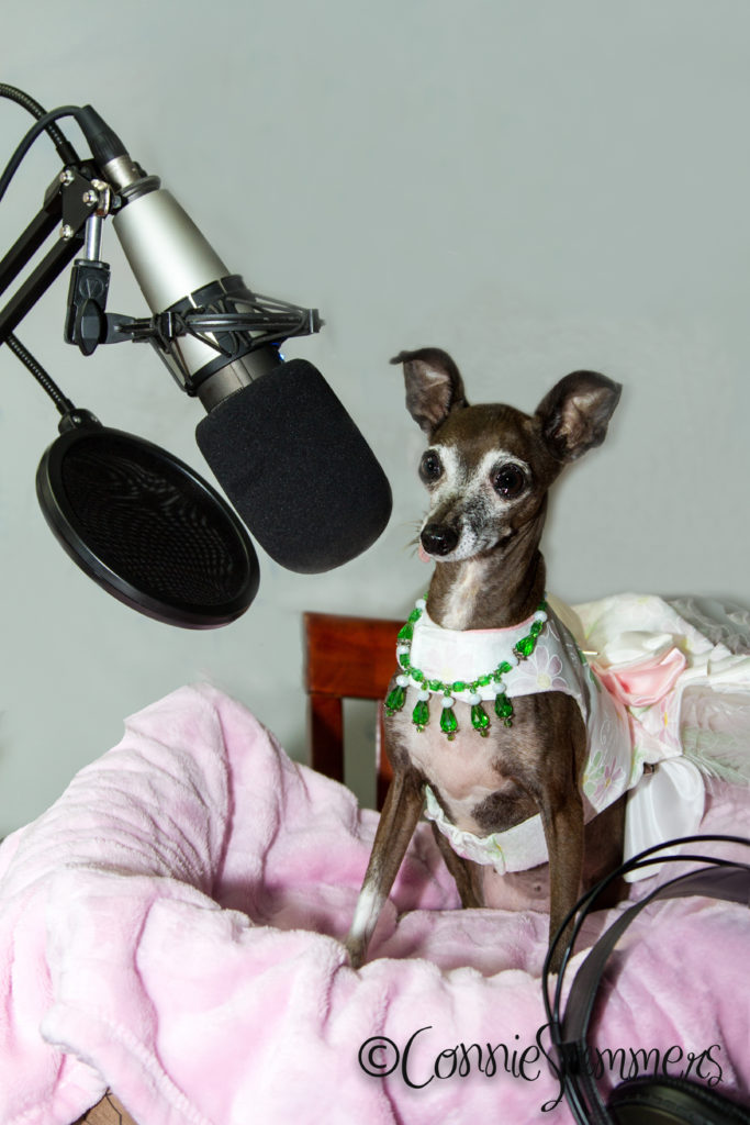 dog of the doggy diva show with microphone