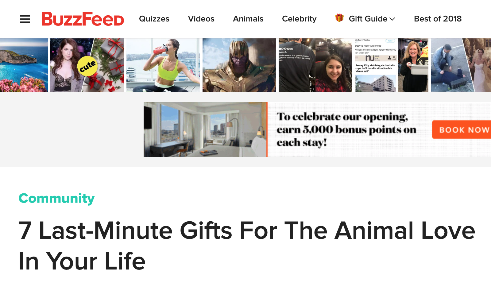 header for Buzzfeed's Last-Minute Gifts for the Animal Love in Your Life