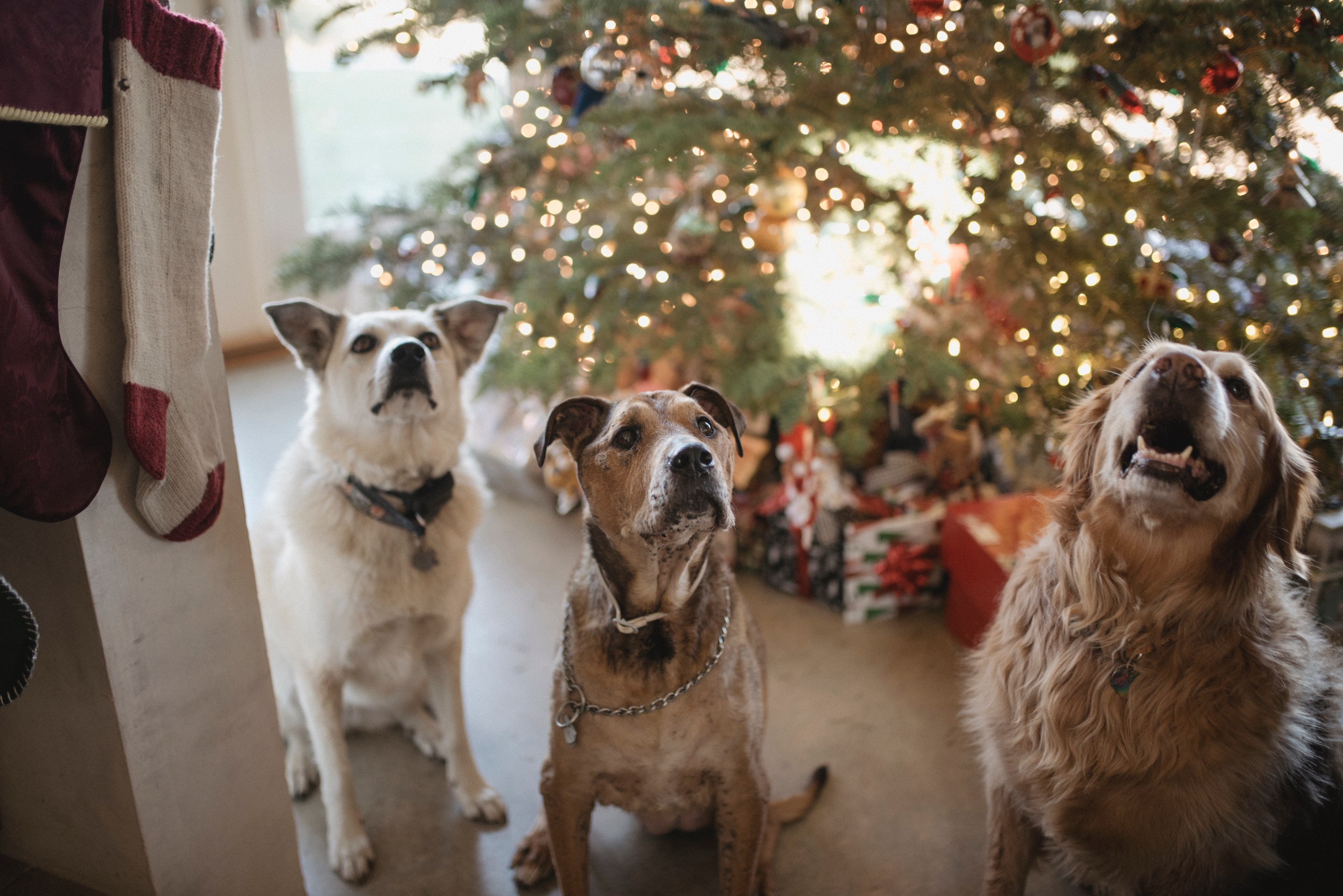 puppy dogs under a christmas tree