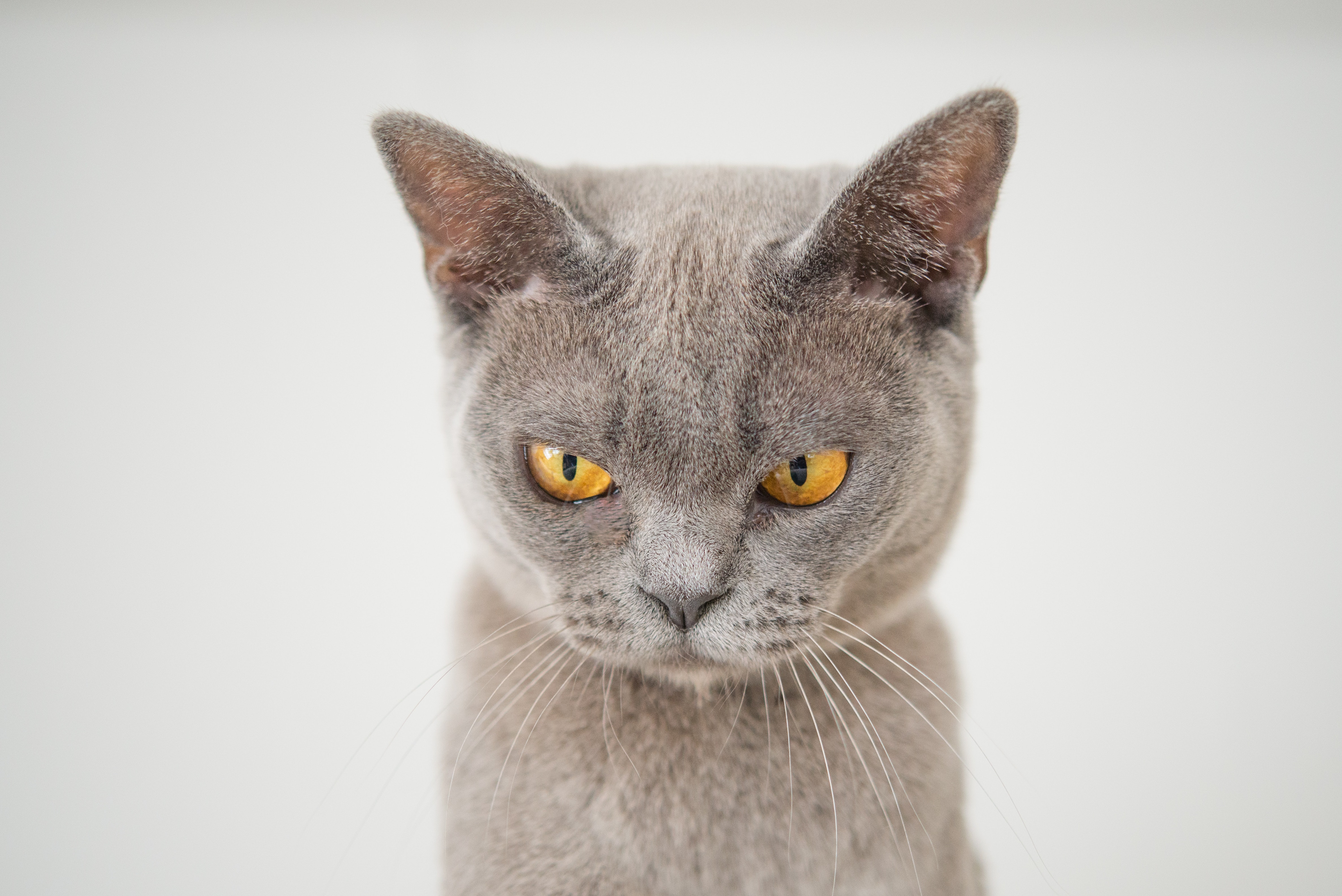 Why your Cat Might be Grumpy