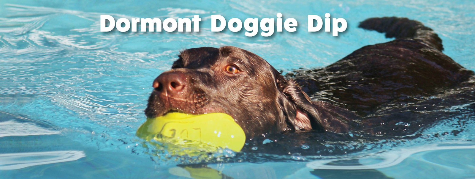 a brown dog with a yellow toy in its mouth cools off in the water at the dormant doggie dip