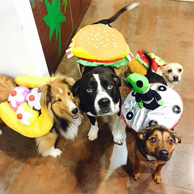 Dogs dressed up in cute Halloween costumes.