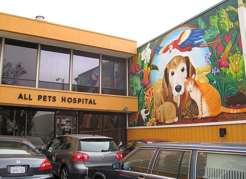 The animal mural on the front of All Pets Hospital