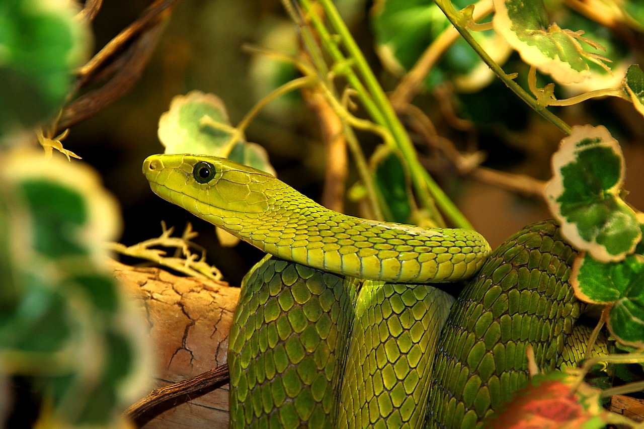 6 Questions You Should Ask Before You Get Your First Reptile