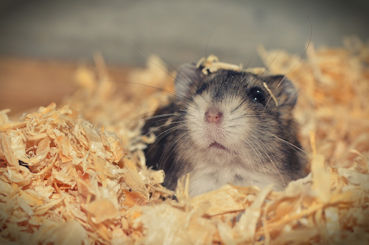 The Ultimate Guide to Hamster Hair Loss