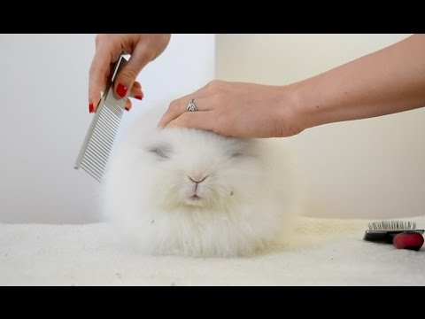 A big fluffball getting brushed