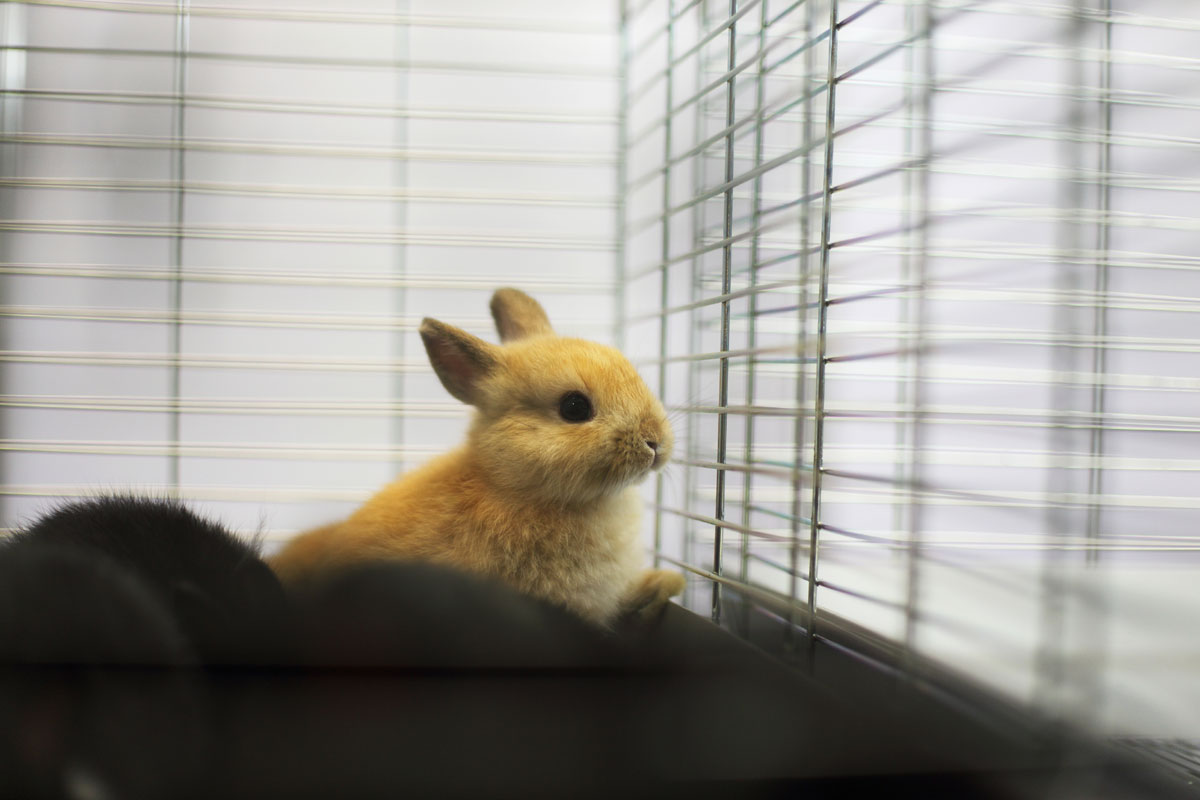bunny in a cage