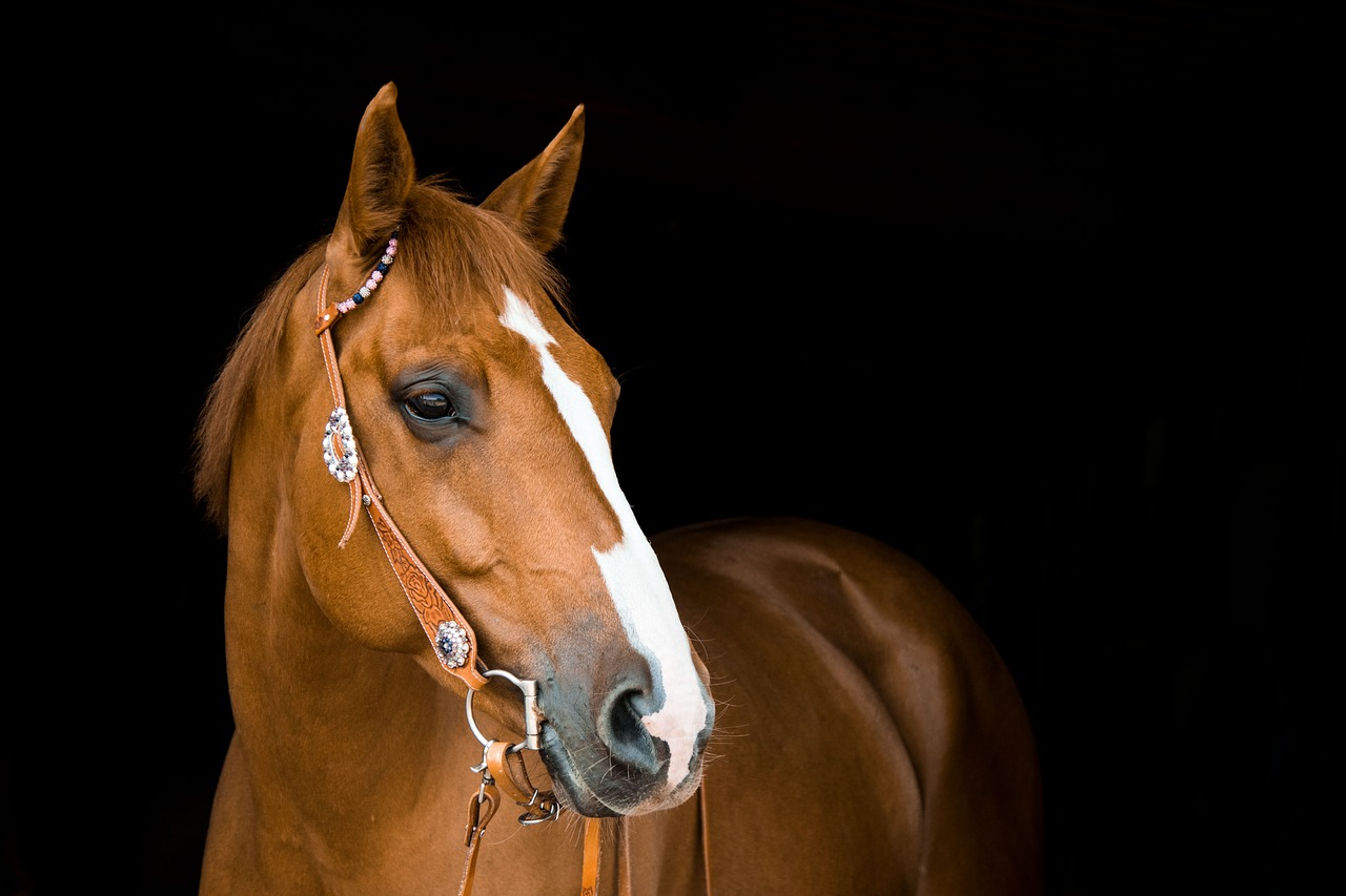 a brown horse with a white nose