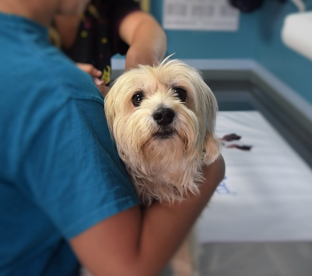 Your vet is your best resource for helping your dog recover from serious wounds. If you have any concerns about helping your dog feel better, make an appointment to see your vet ASAP.