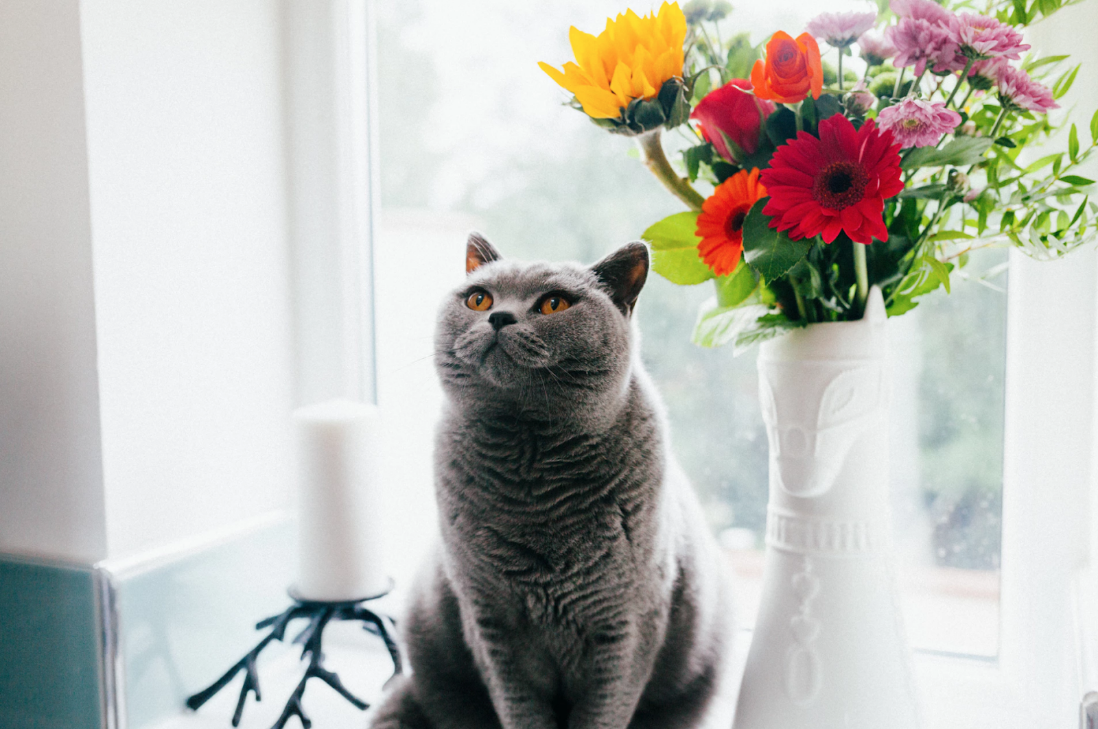 A gray cat with orange eyes sits next to a colorful vase of flowers, relaxing after a day full of play and exercise