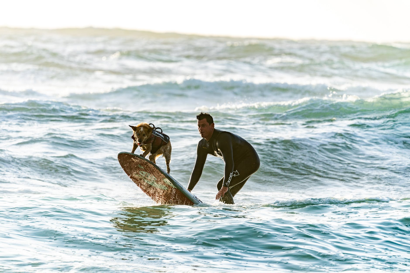 A man supervising a surfing dog