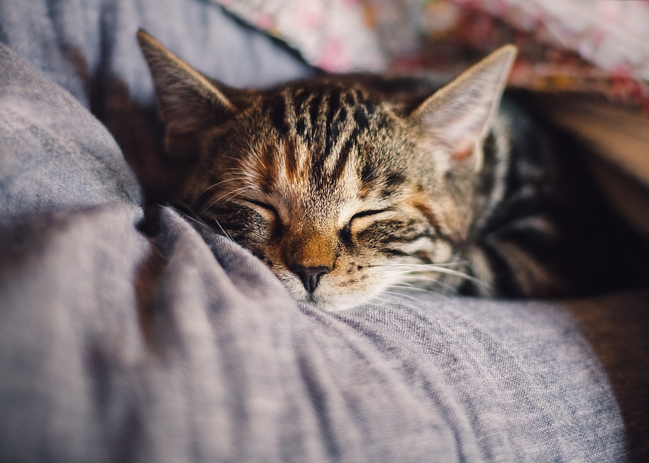 The Ultimate Guide to CBD Oil for Cats