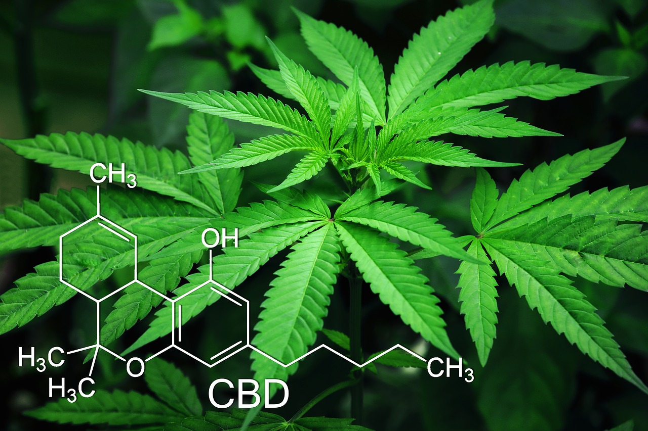 Marijuana Plant with the Chemical Composition Written on the Photo
