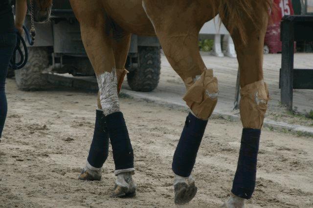 Brown Horse Legs Walking in Mud