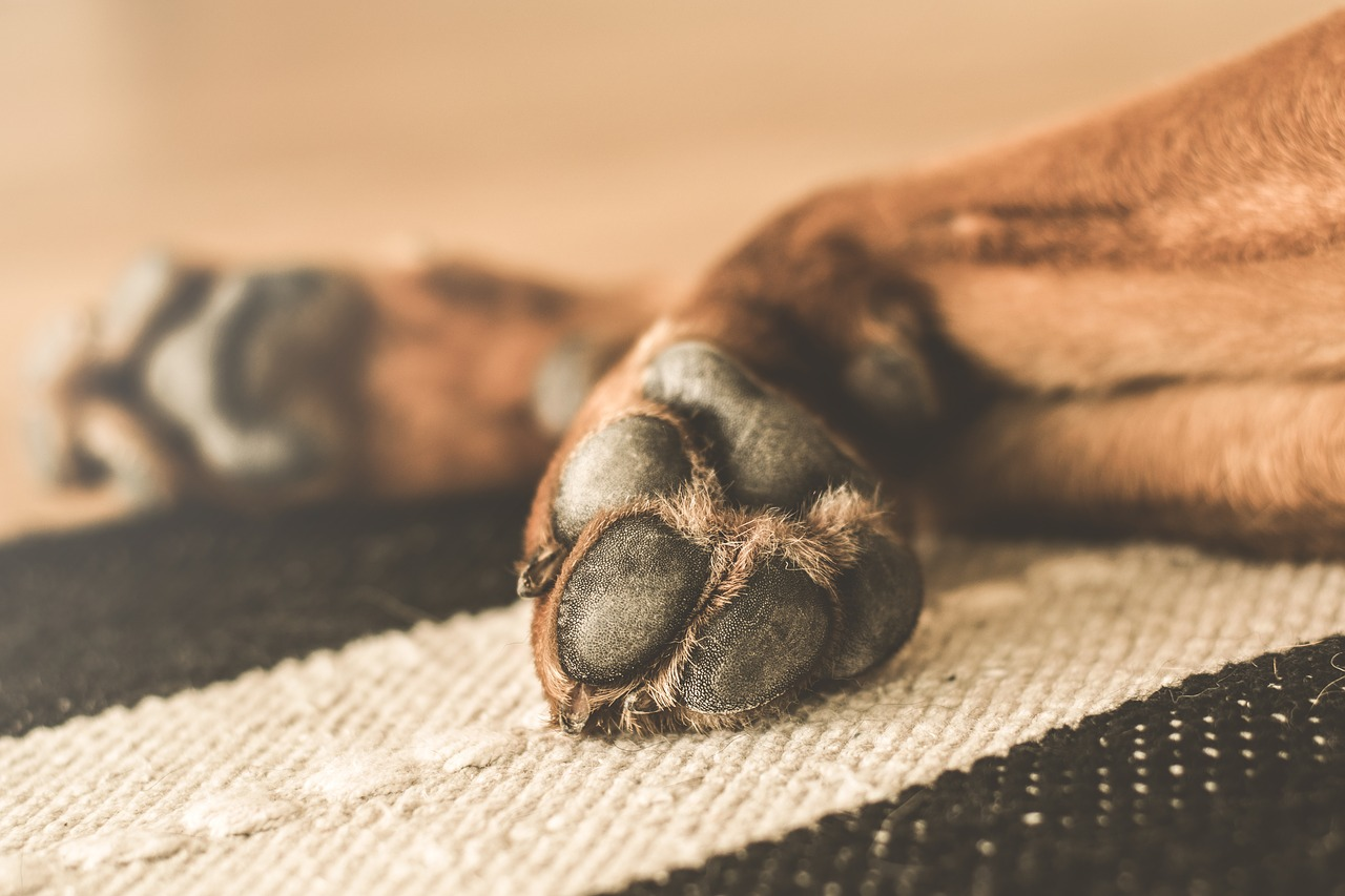 A dog's paws stretched on a carpet