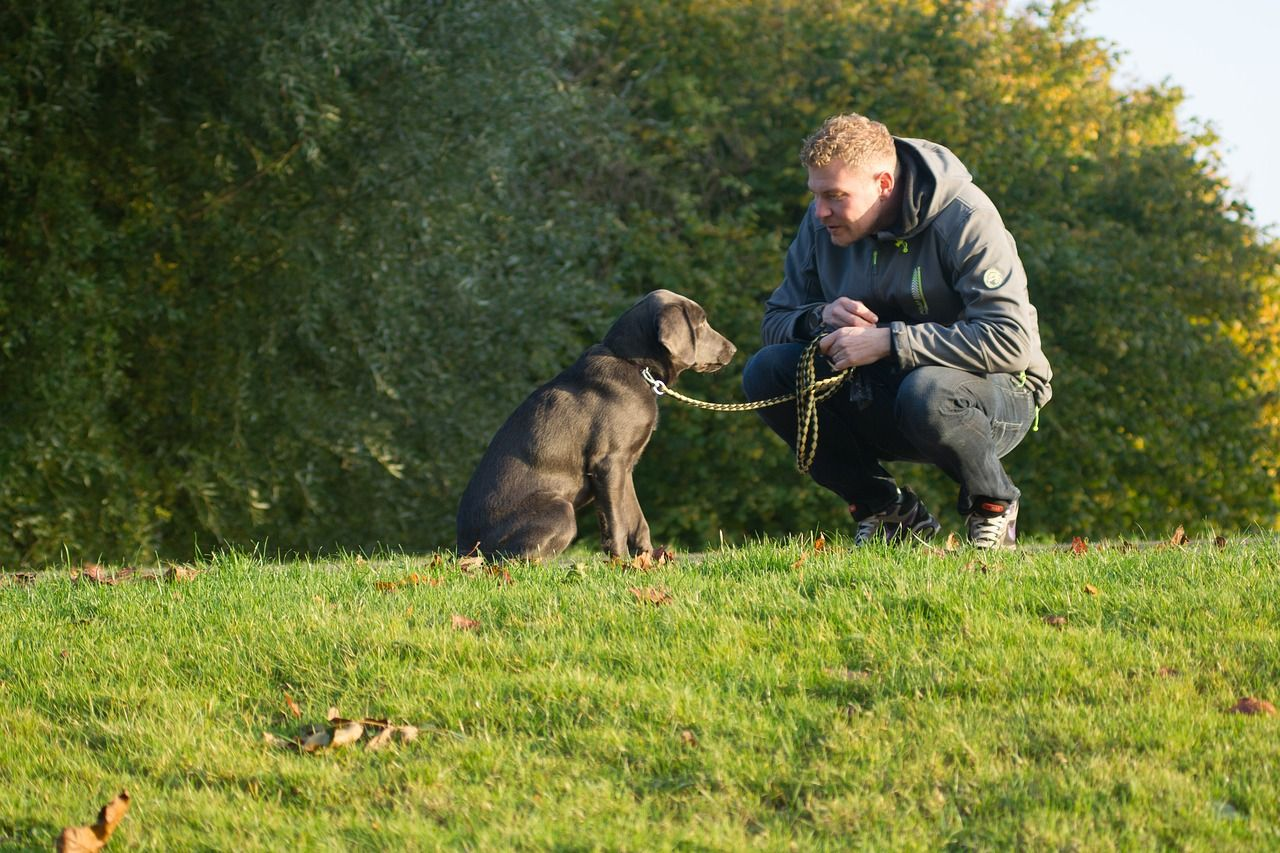 A man crouching down to look at his dog who sits in front of him on a short leash. They are in a field with trees in the background.