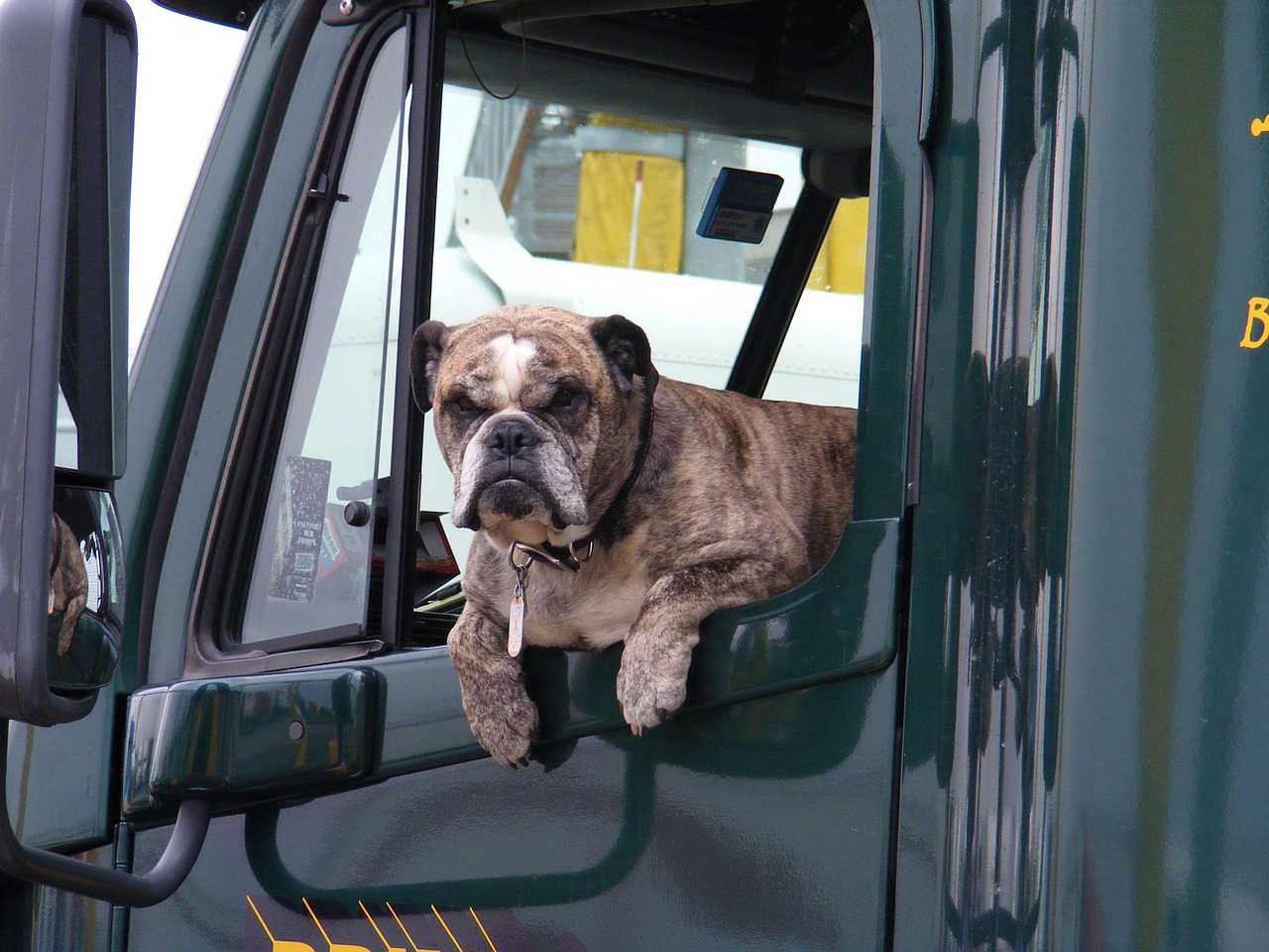 A dog leaning out the window of a truck