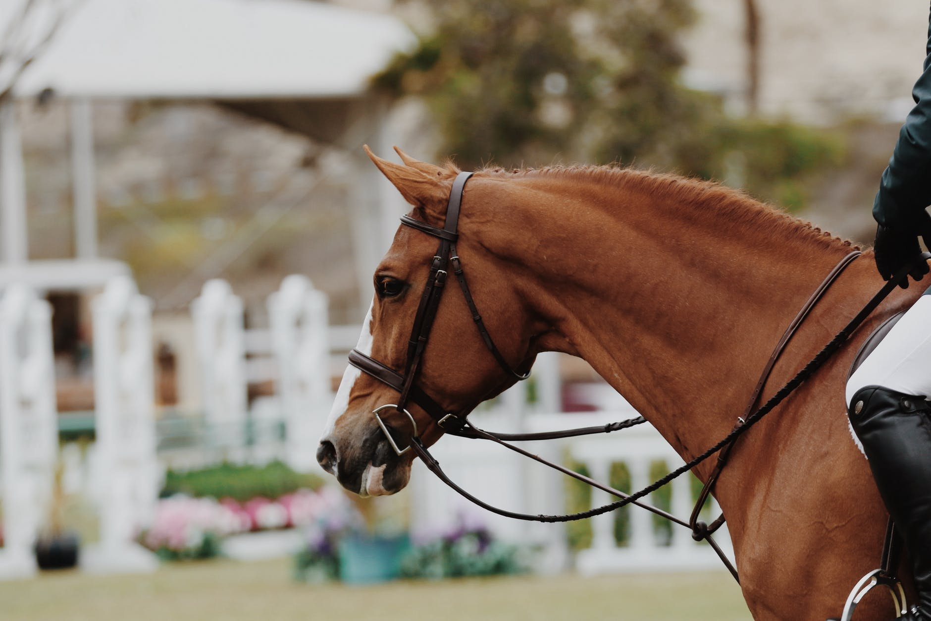 Tips To Keep Your Horse Mentally Stimulated