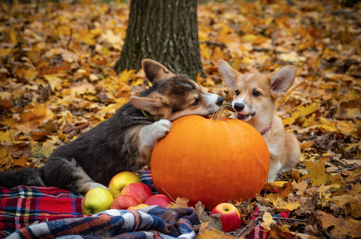 Lights, Camera, Action for a Pumpkin Patch Photo Shoot with Your Pooch!