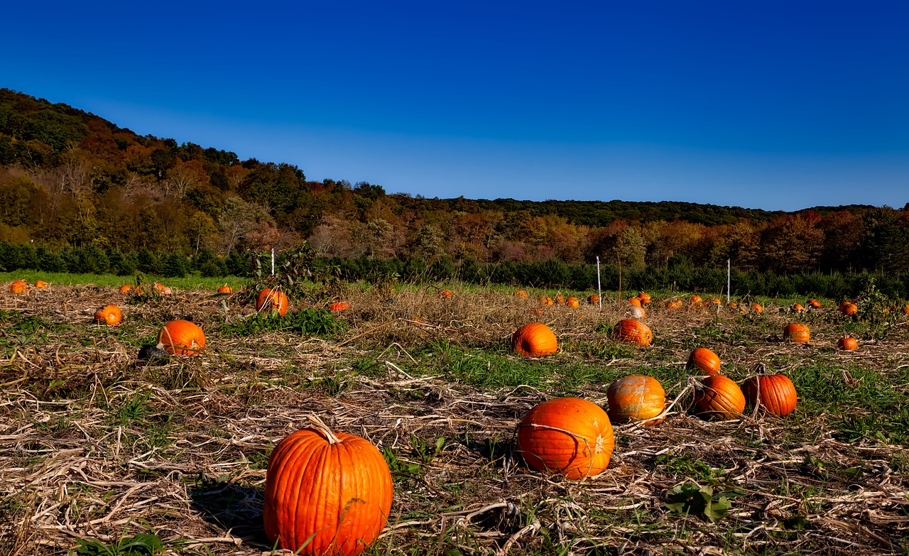 A pumpkin patch worthy of fall photo shoots