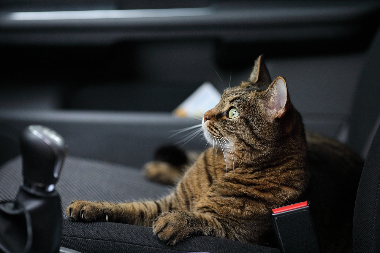 Cat sitting in the passenger seat of a car