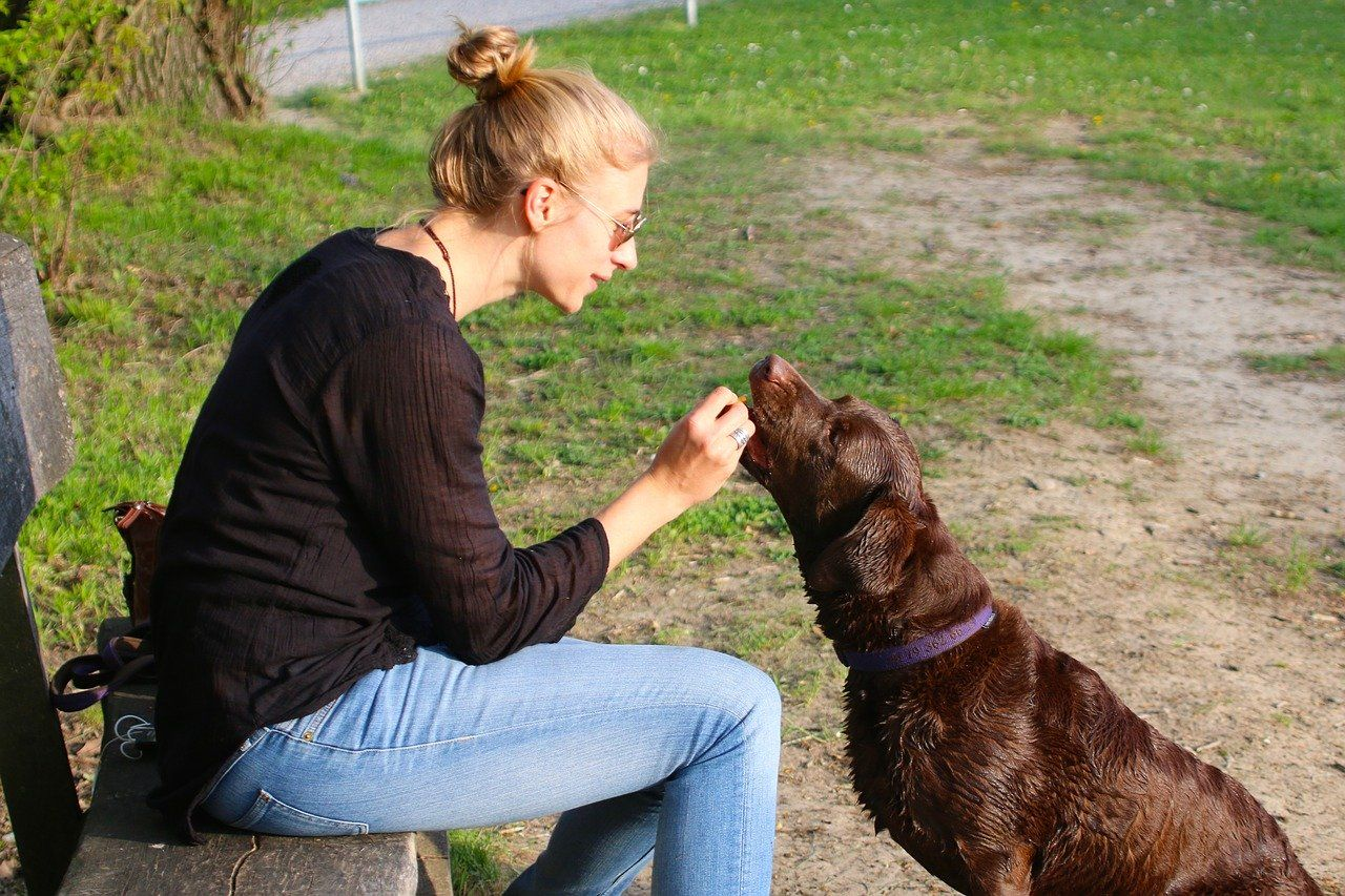 Woman sitting outside on a bench, giving her dog a treat
