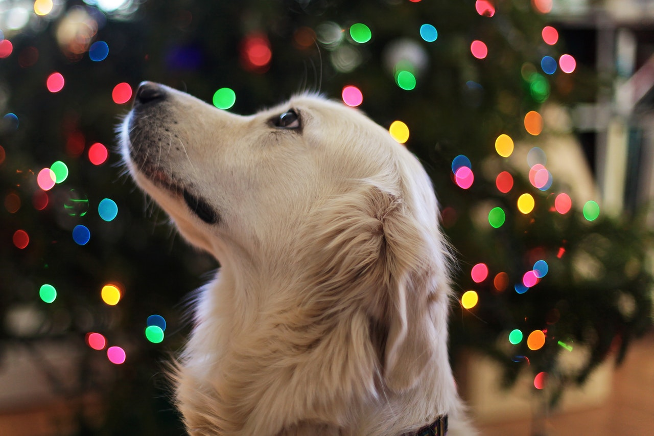 a golden retriever in front of a christmas tree
