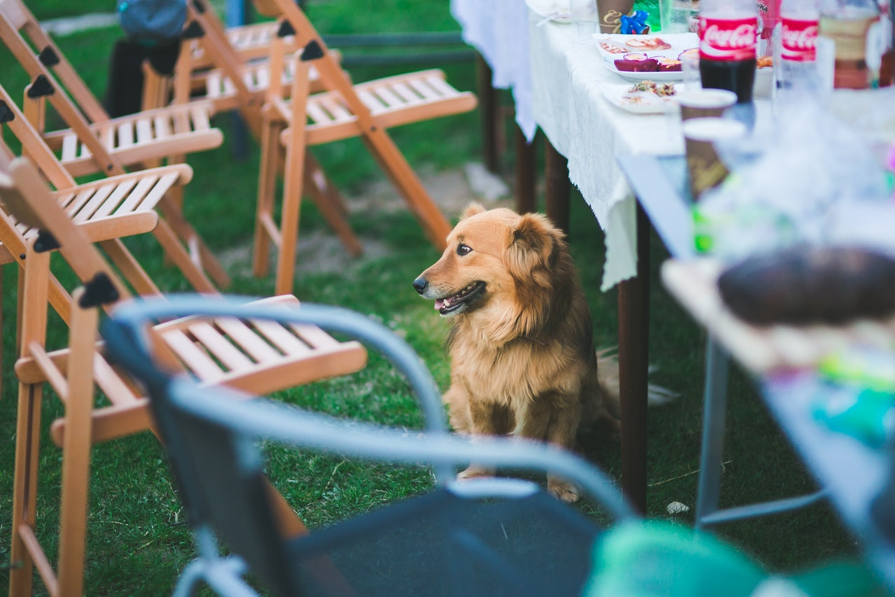 Outside, dog sitting almost under the table that is set up for a party