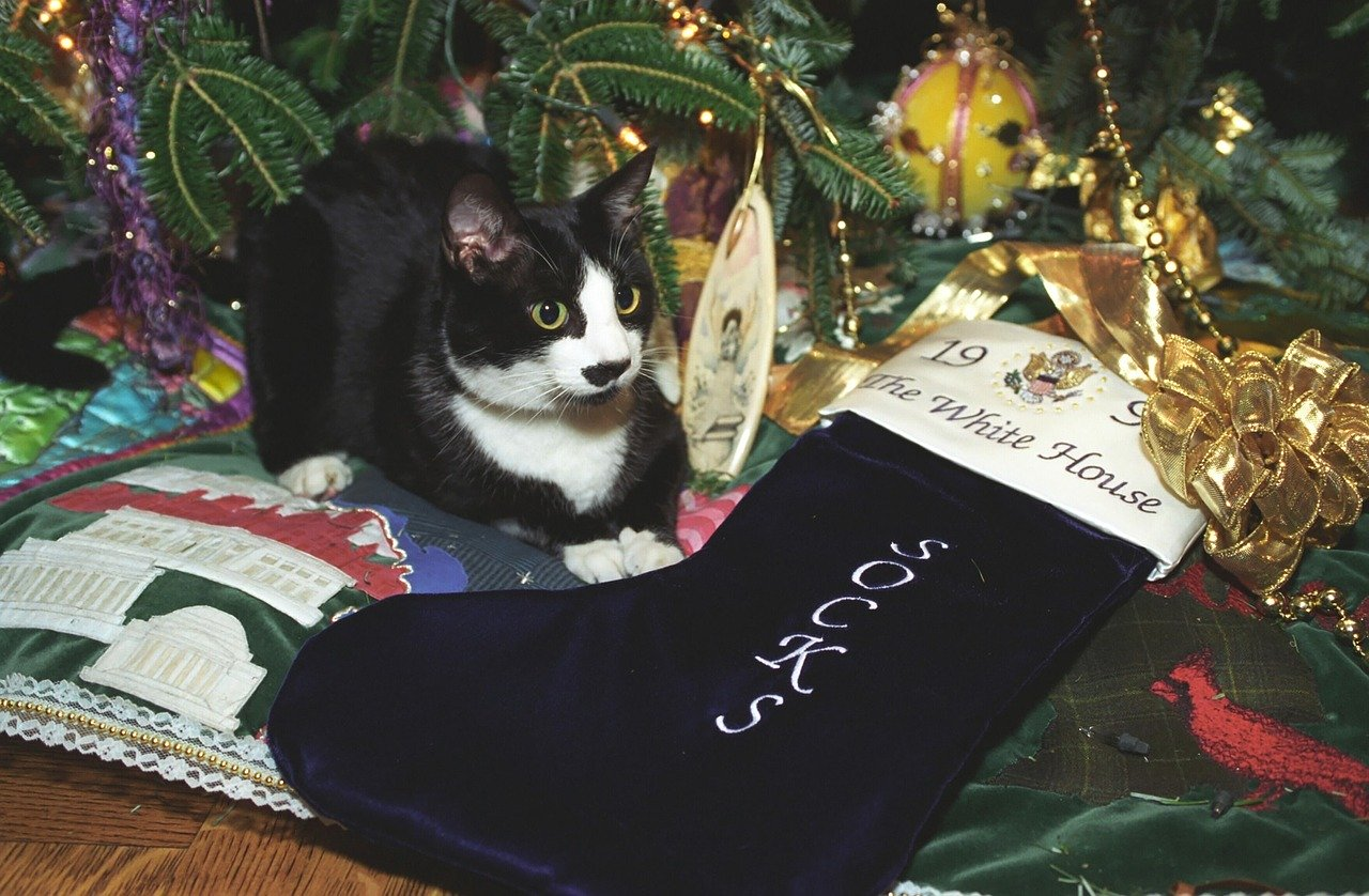 Cat sitting under a decorated Christmas tree