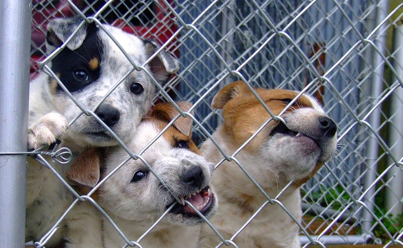Puppies looking past a fence