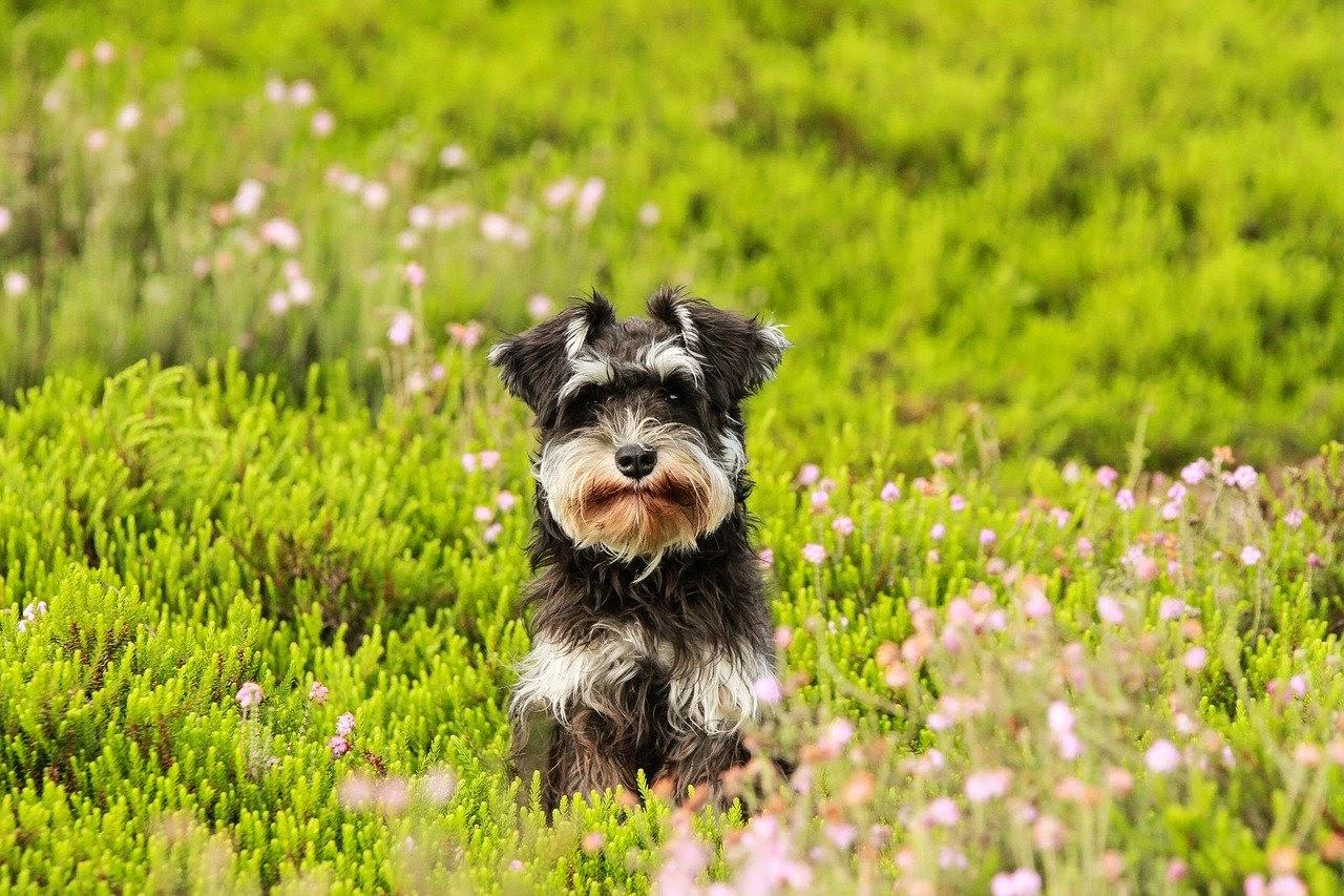 Small dog running through tall grass