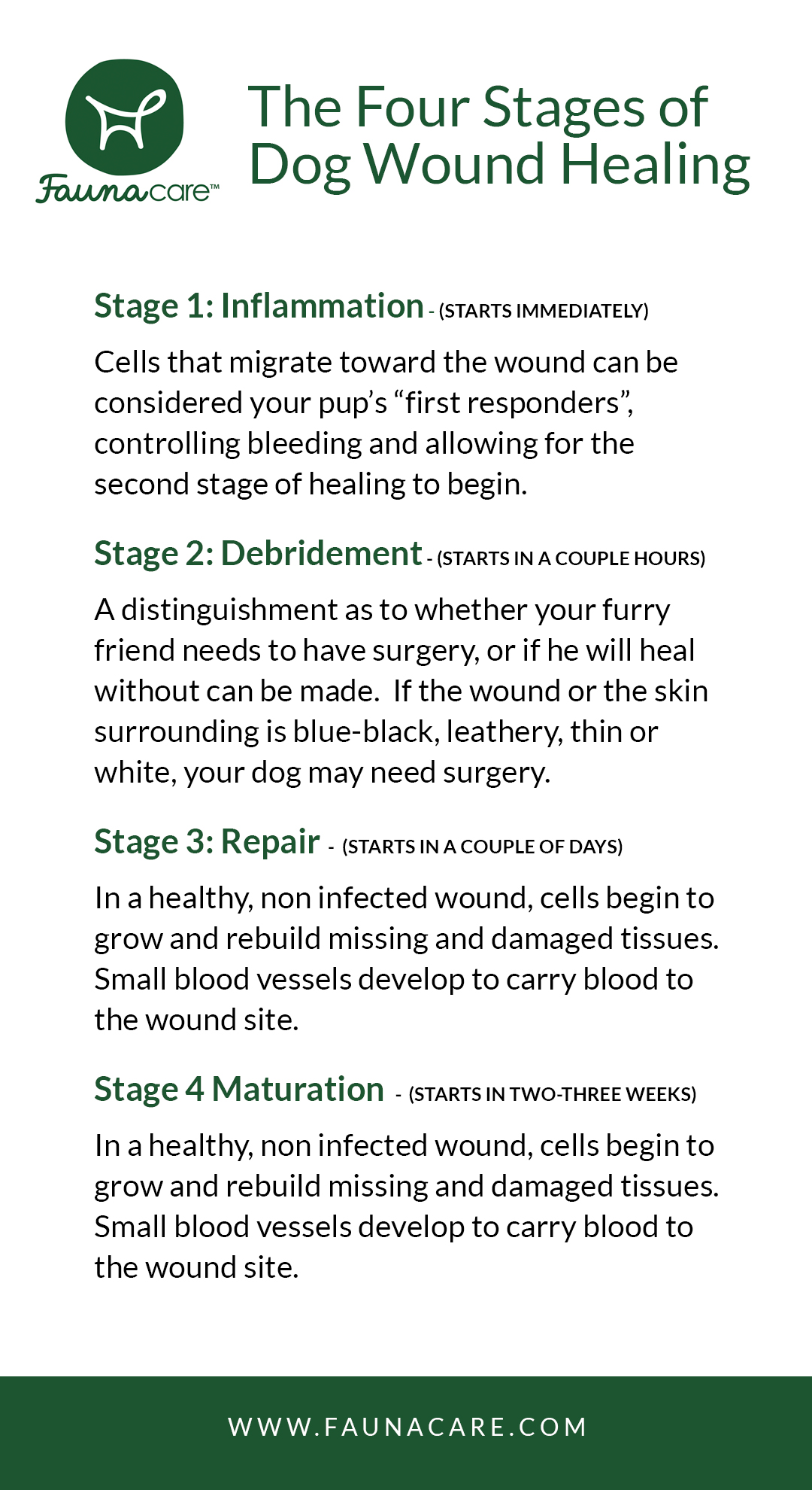 Infographic of the four stages of dog wound healing