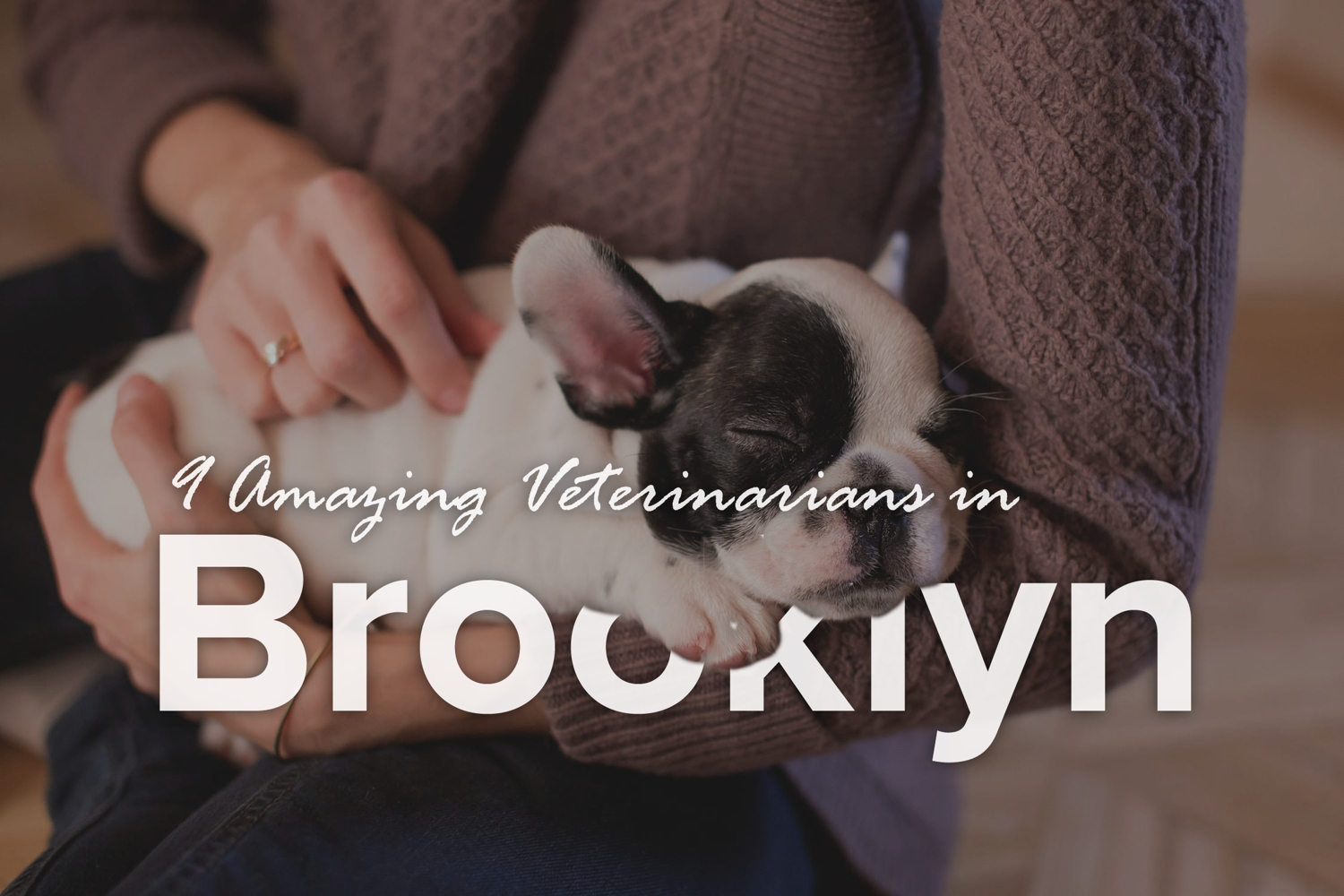 9 Amazing Veterinarians in Brooklyn