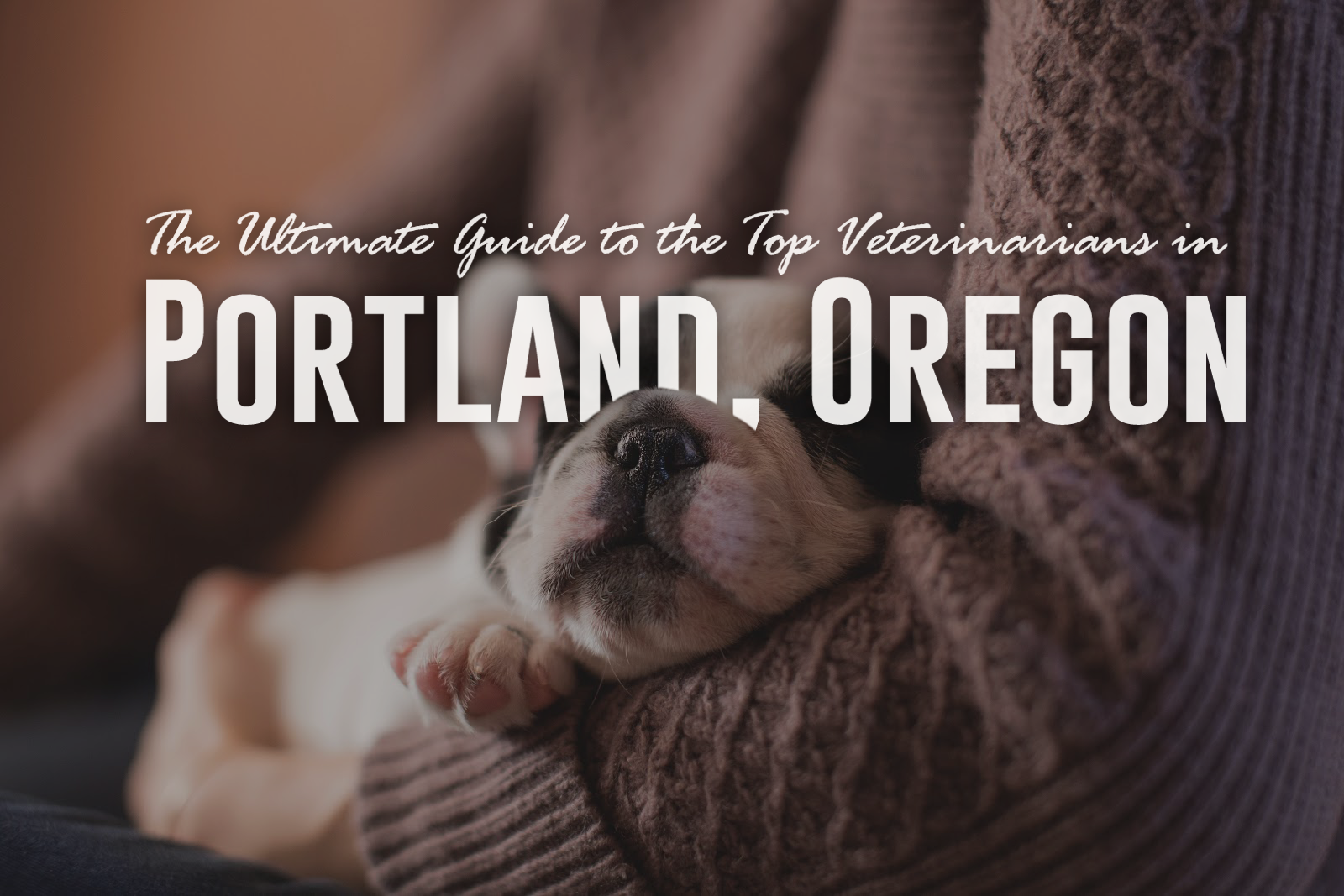 The Ultimate Guide to the Top Veterinarians in Portland, Oregon