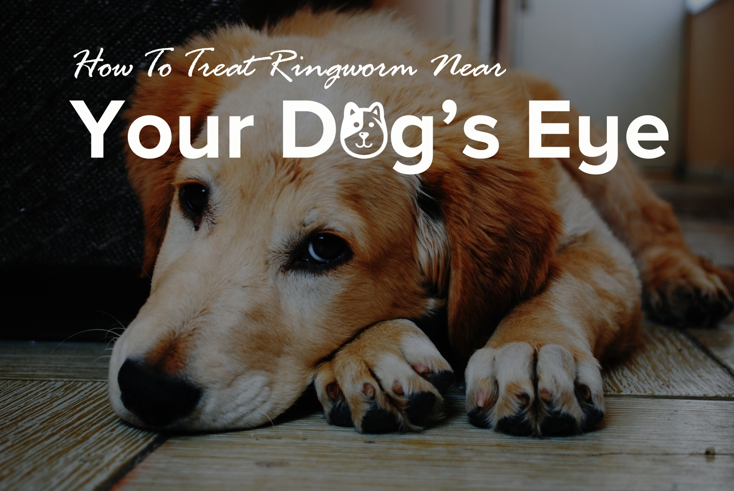 How To Treat Ringworm Near Your Dog's Eye
