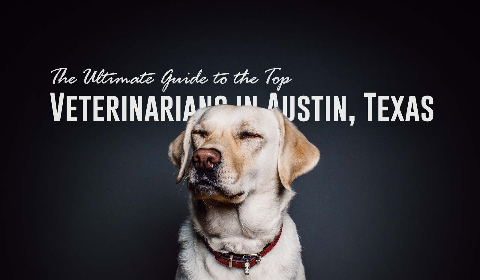 The Ultimate Guide to the Top Veterinarians in Austin, Texas