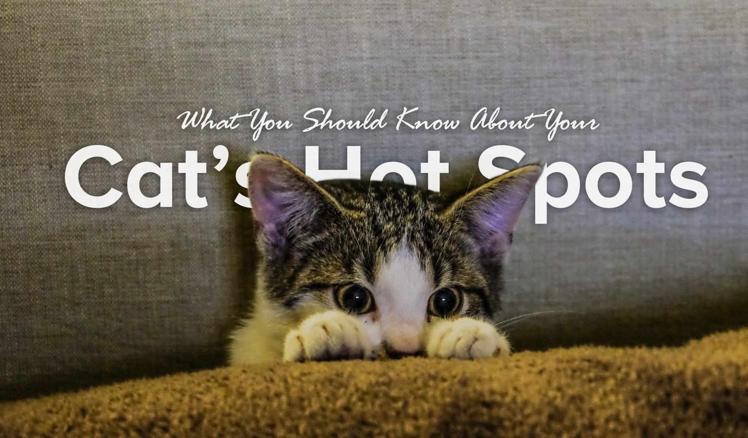 What You Should Know About Your Cat's Hot Spots