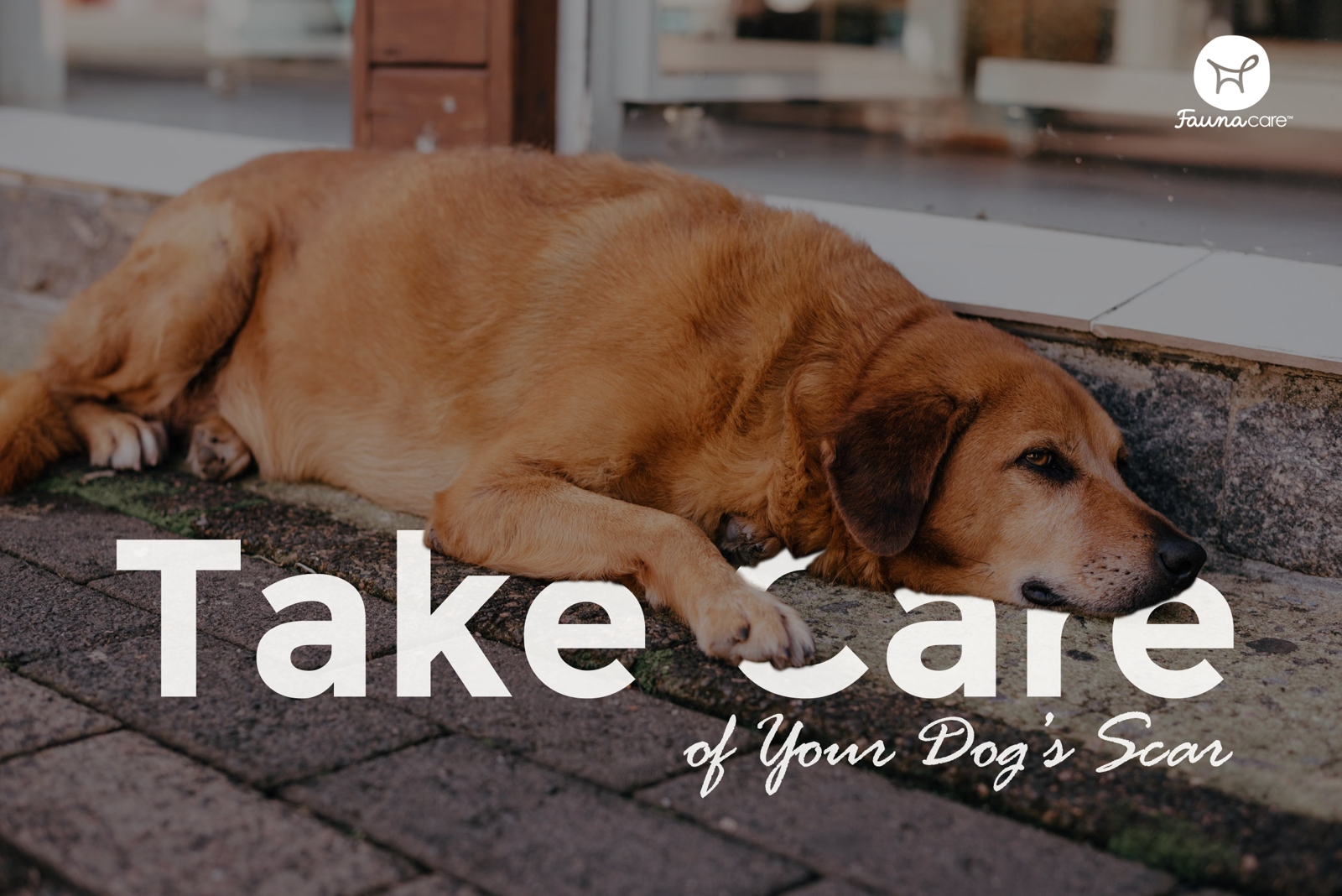 Take Care of Your Dog's Scar