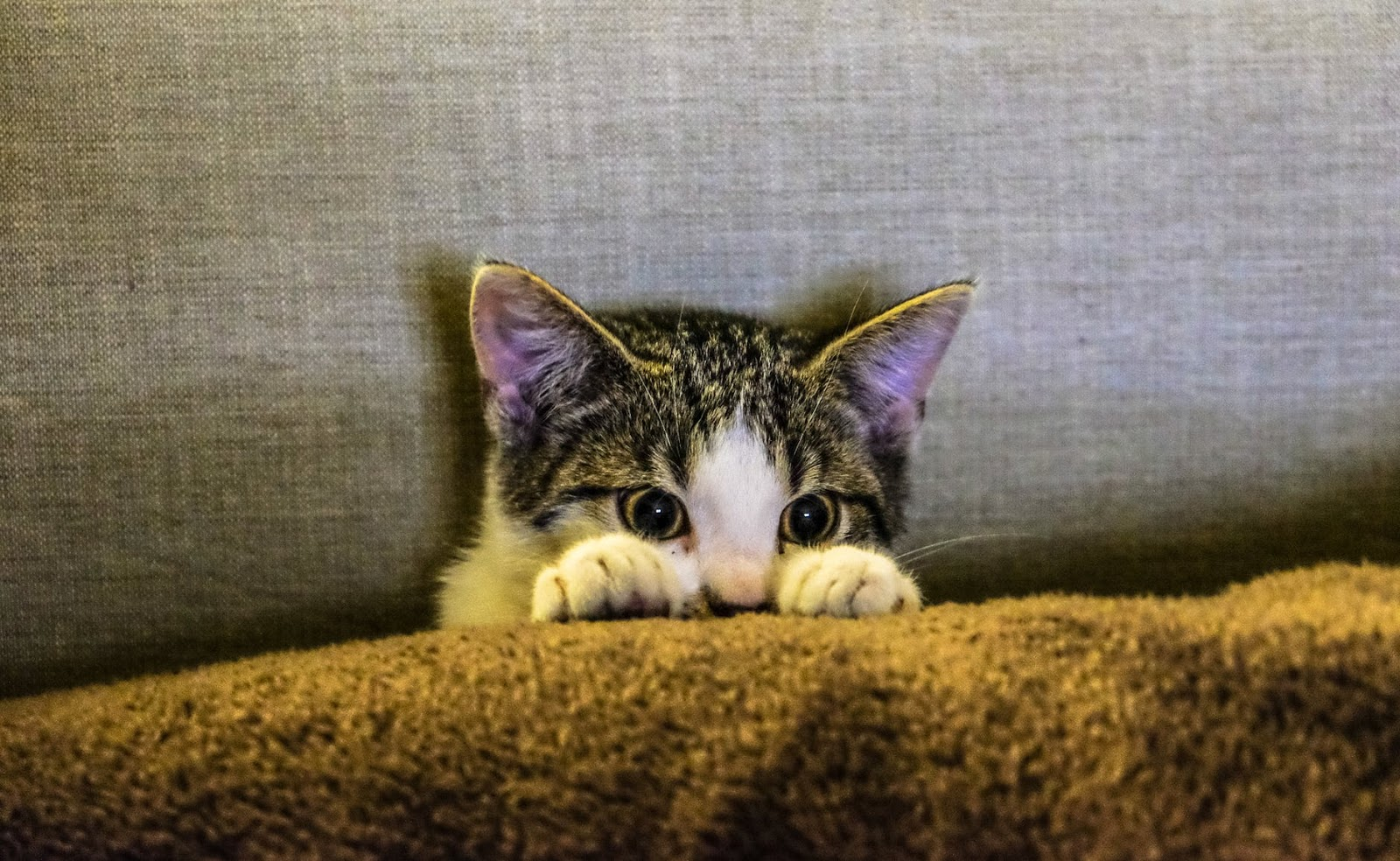 a cat hiding peaking out from behind a cushion